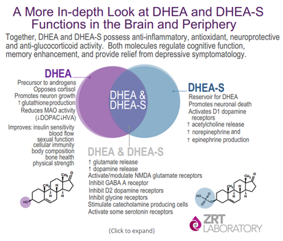 The Distinction Between DHEA and DHEA-S & Why Both Are