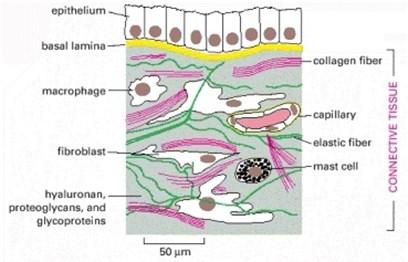 Collagen, Wrinkles & Aging Skin