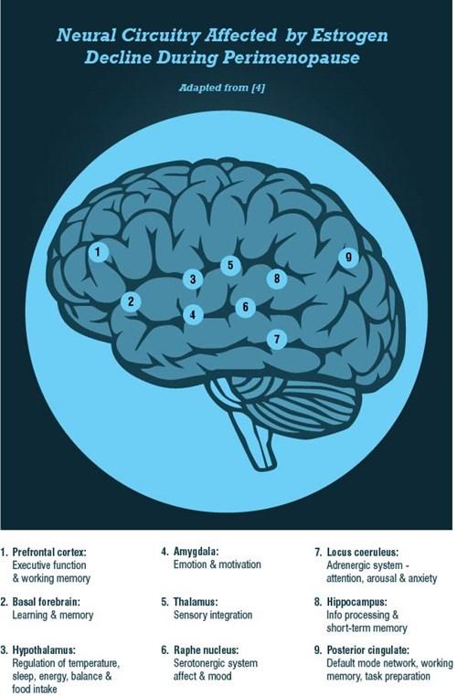 Brain Neurotransmitters diagram