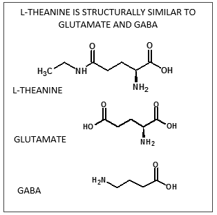 L-theanine graphic
