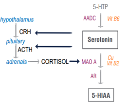 serotonin cortisol kinship diagram
