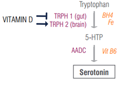 serotonin vitamin d diagram