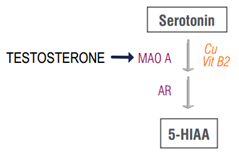 The Impact of Hormones on Serotonin in Depression - ZRT