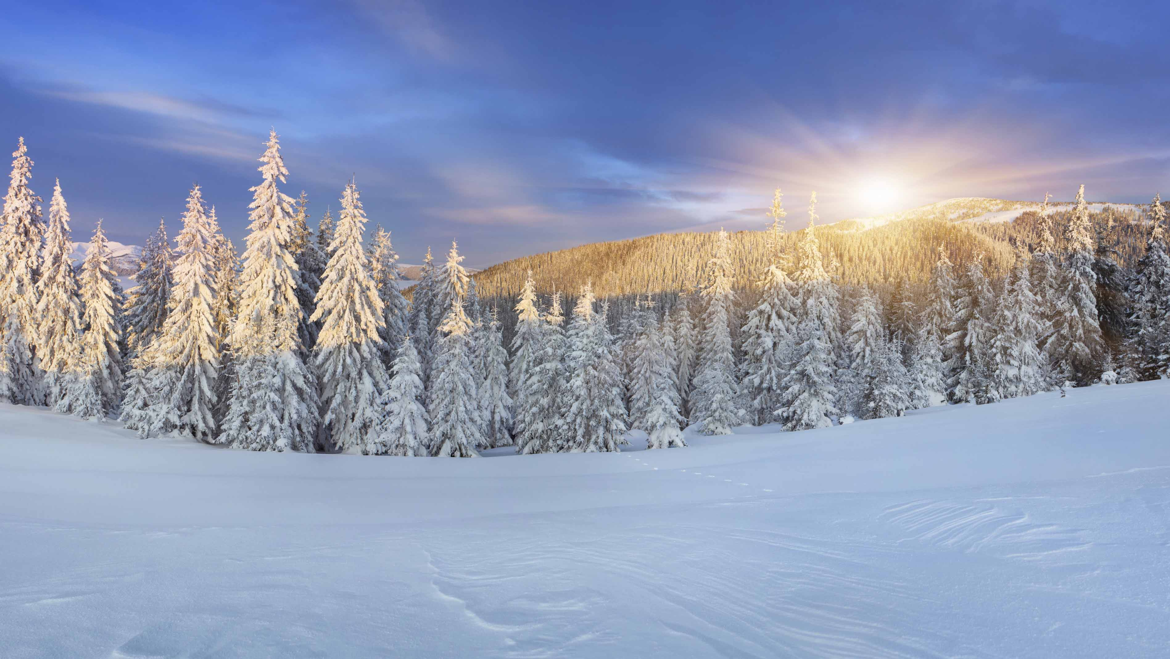 Snowy trees in the winter with sun rising