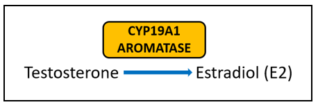 Aromatase inhibitors in breast cancer therapy