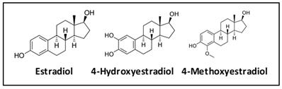 Dangers of catechol estrogens
