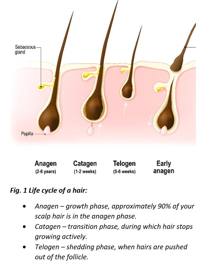 Understanding The Connection Between Hormones And Hair Loss Zrt Laboratory