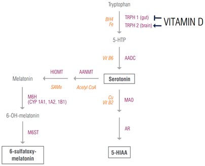 Vitamin D and Melatonin Connection