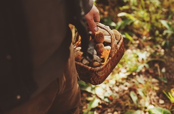Pacific Northwest Wild Mushrooms – Nutrients from the Forest Floor